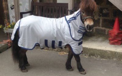 Equine charity delight in the horse rugs we've donated!
